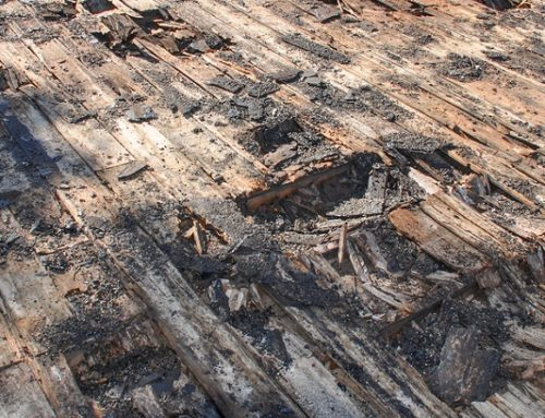 What Should I Do If I Have Roofing Dry Rot?